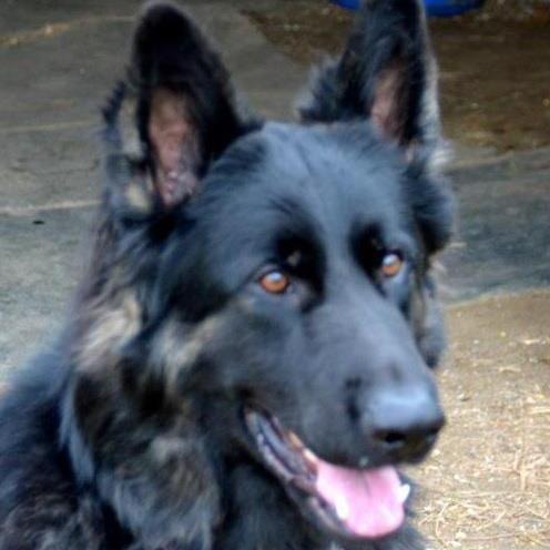 Alpha Dog Services