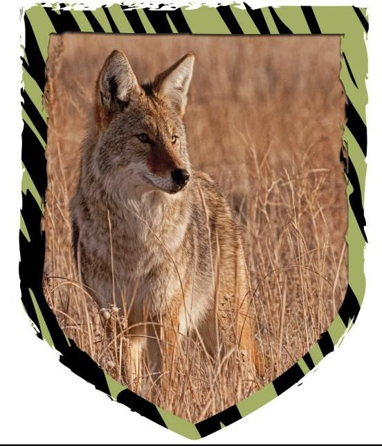 Eco Wildlife Solutions, LLC