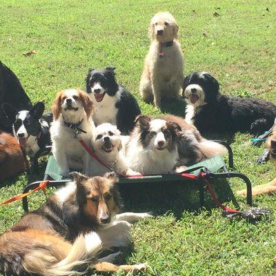 Avatar for Hornbaker Dog Training Catharpin, VA Thumbtack