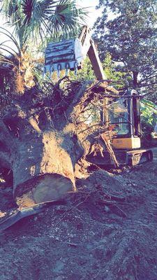 Avatar for Precision Cuts Tree Specialists LLC