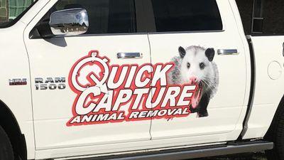 Avatar for Quick Capture Animal Removal Dallas, TX Thumbtack
