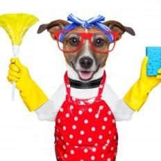 Sparklepup Cleaning and Critter Care