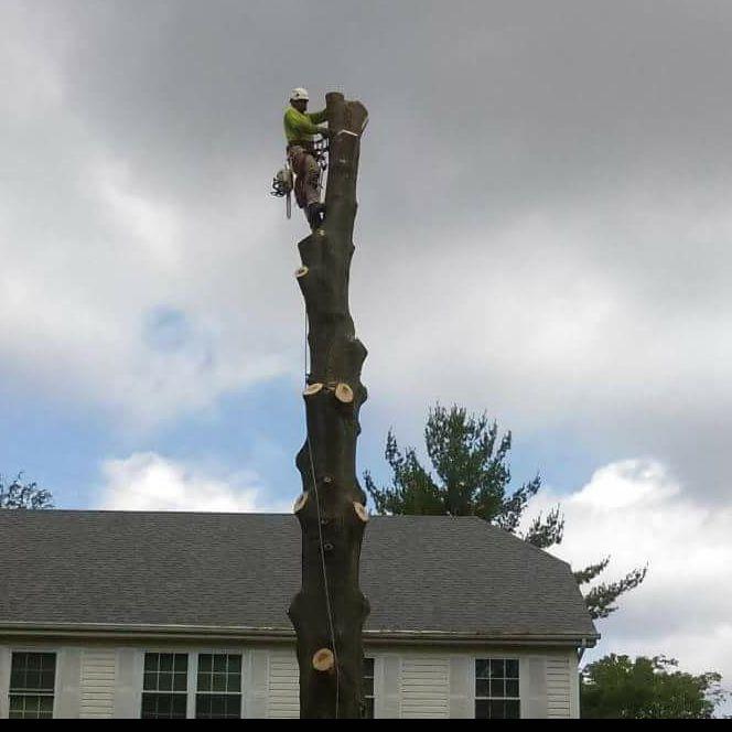Rico Tree Service