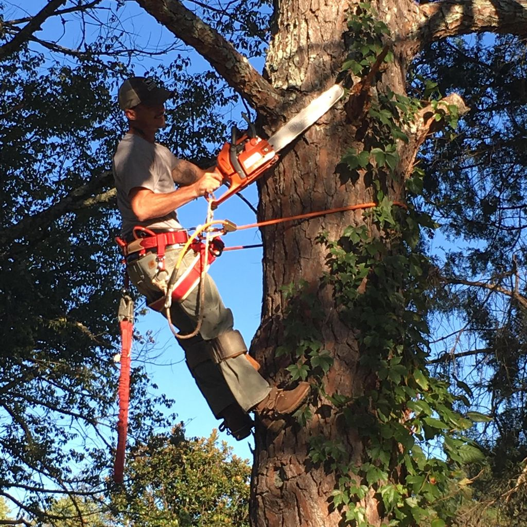Greer's Tree Trimming & Removal