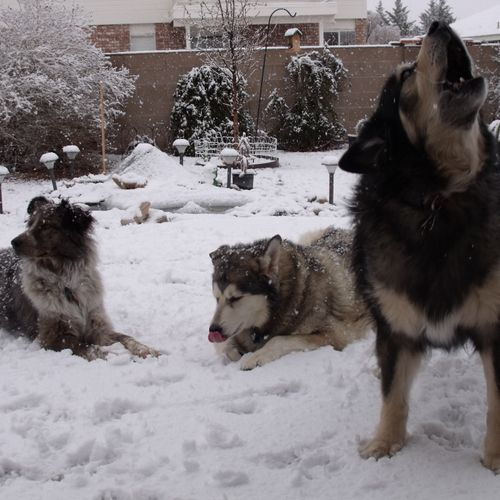 Our well- behaved pack!