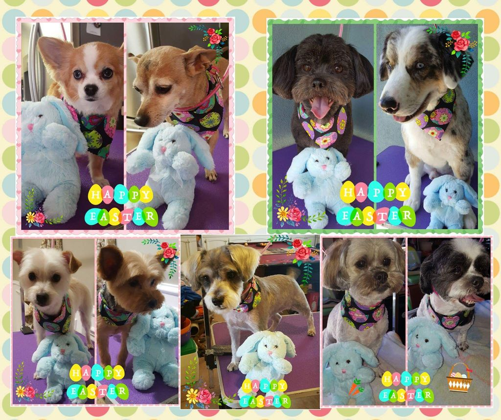 Michie's Pampered Pets House Call Grooming