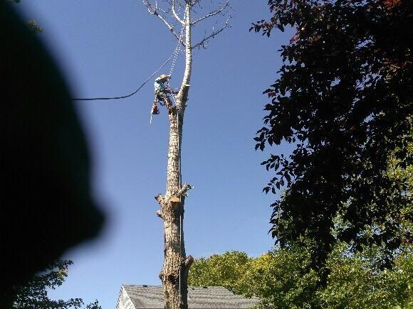 A&B Tree Services Inc.