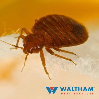 Avatar for Waltham Pest Services