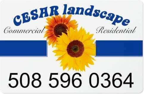 Cesar Landscaping
