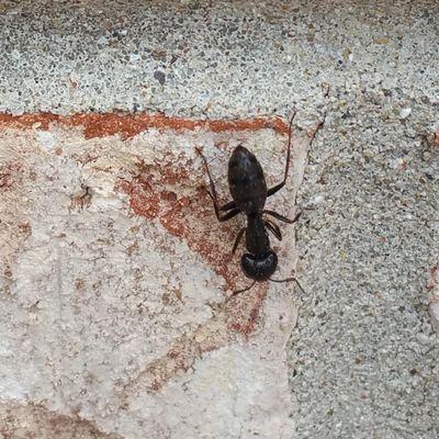 Avatar for Denton Pest Control Saint Charles, IL Thumbtack