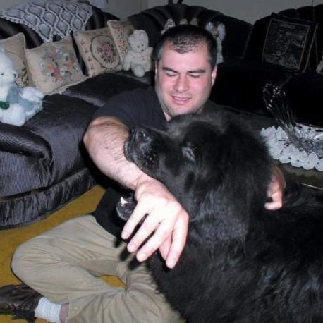 Alex Himel Certified Dog Trainer