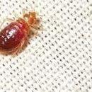 Avatar for A Plus Pest Management