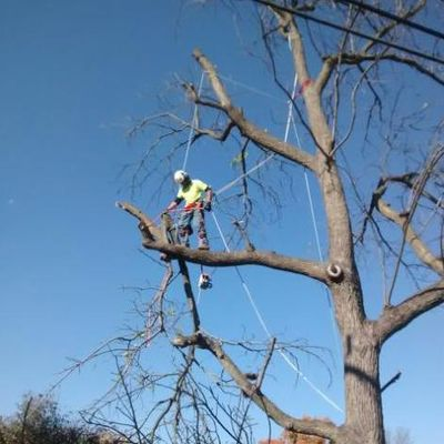 Avatar for TBBK Tree Service Heyworth, IL Thumbtack