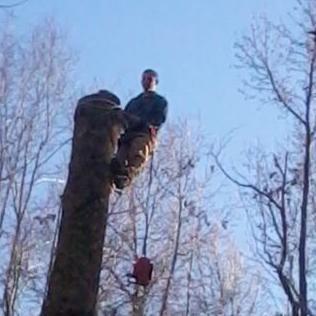 Avatar for Parrish Tree Service Durham, NC Thumbtack