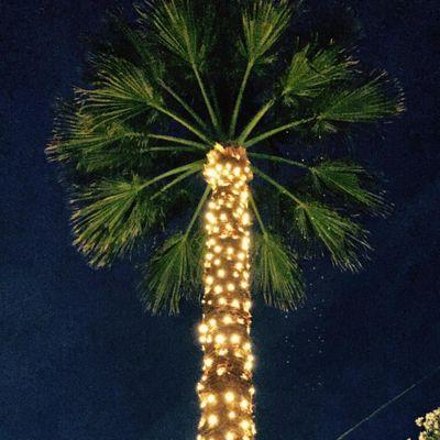 Avatar for Holiday Helpers & Event Helpers, LLC Phoenix, AZ Thumbtack