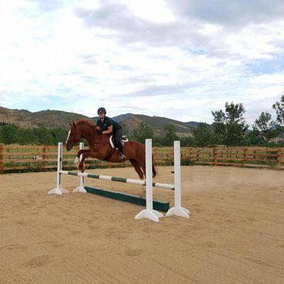 Avatar for Apollo Equestrian LLC Loveland, CO Thumbtack
