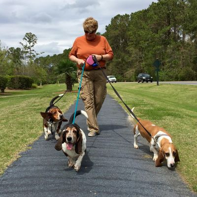 Avatar for Who Walks Your Dog? Mount Pleasant, SC Thumbtack