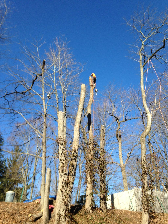 Michaud Tree & Landscaping, LLC