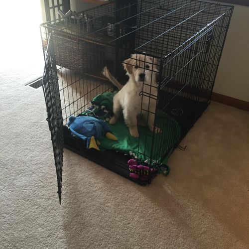 Bailey loves her crate!