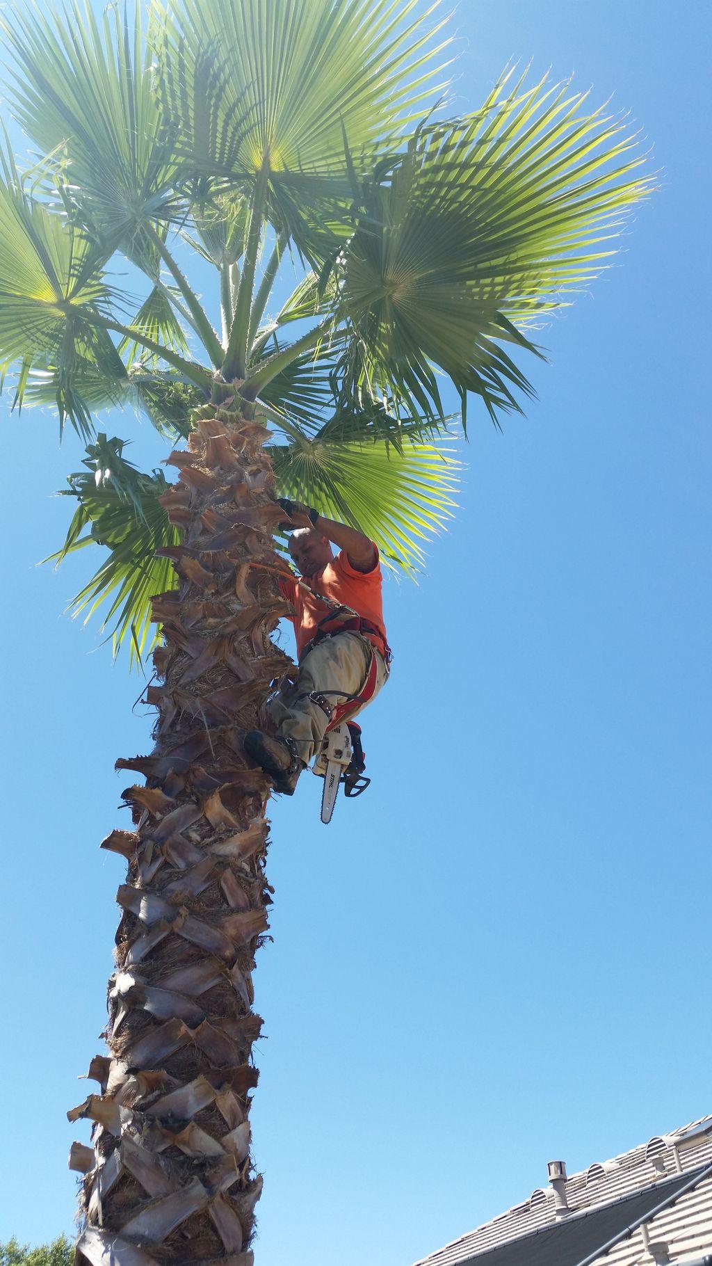 Mercado's Tree Service