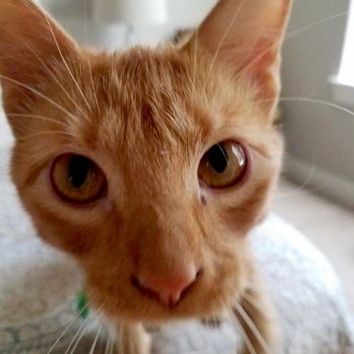 Cat Sitting Dallas, Cat Sitter Dallas, Pet Sitter Dallas - The BEST Pet Sitting Dallas