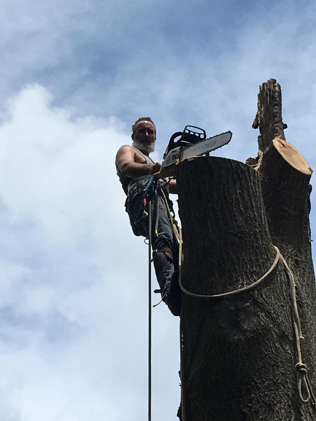 All-American Tree Service