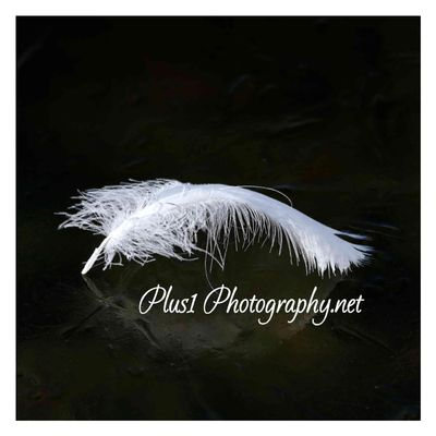 Avatar for Plus1 Photography