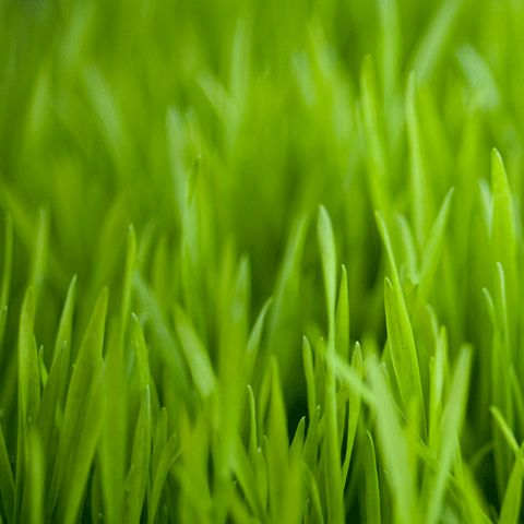 Turf Tamers Lawn Care - Mowing and Irrigation S...
