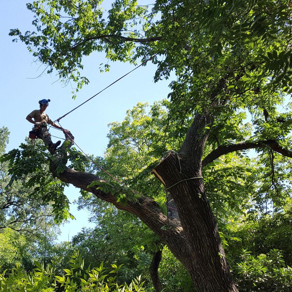 Arbor Cure Tree Service