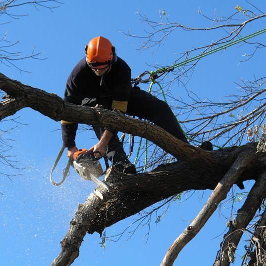Aaron's Tree Service