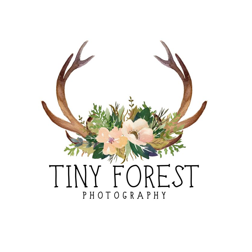 Tiny Forest Photography