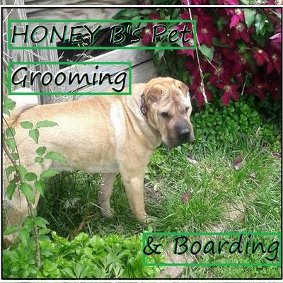 Avatar for Honey B's Grooming