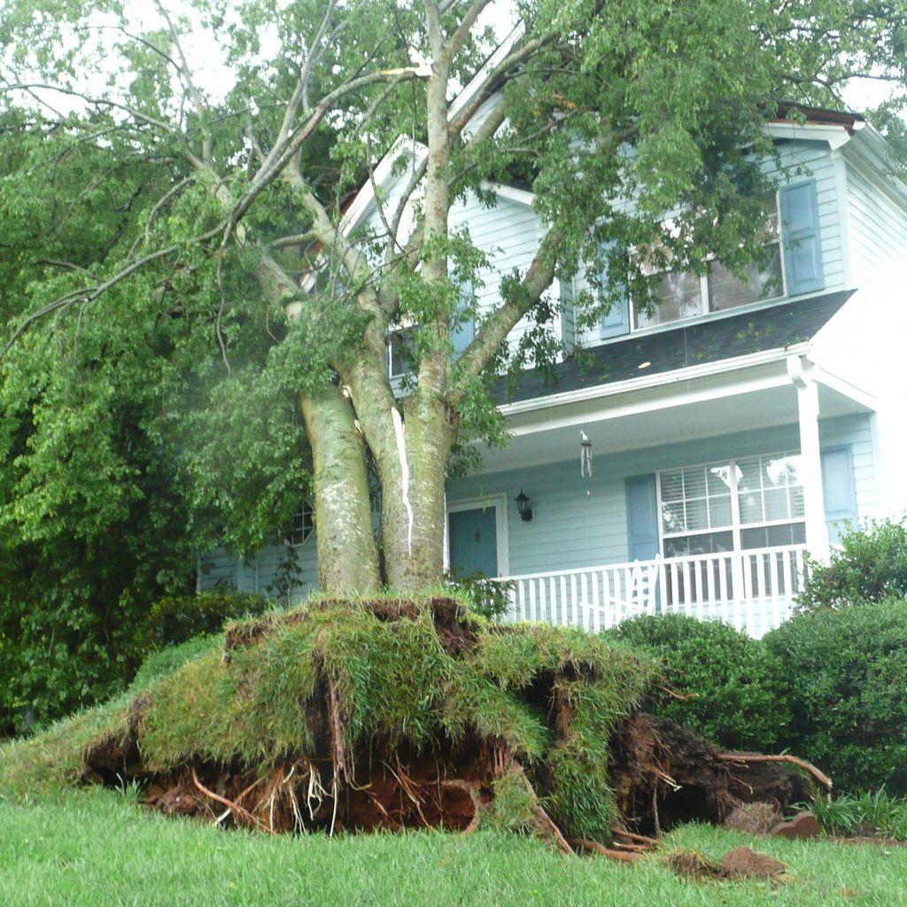 Allen Tyree Tree Stump Removal