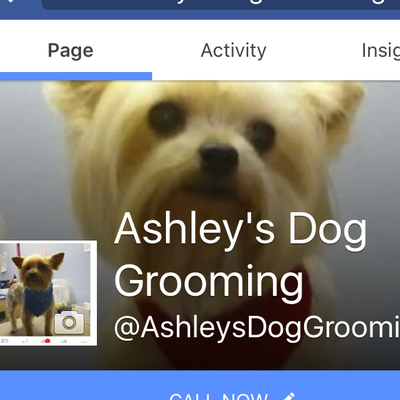 Avatar for Ashley's dog grooming and dog sitting services Talladega, AL Thumbtack