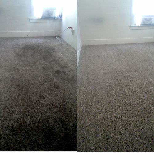 Thrashed carpet, made new again using Spifco's advanced Health First system.
