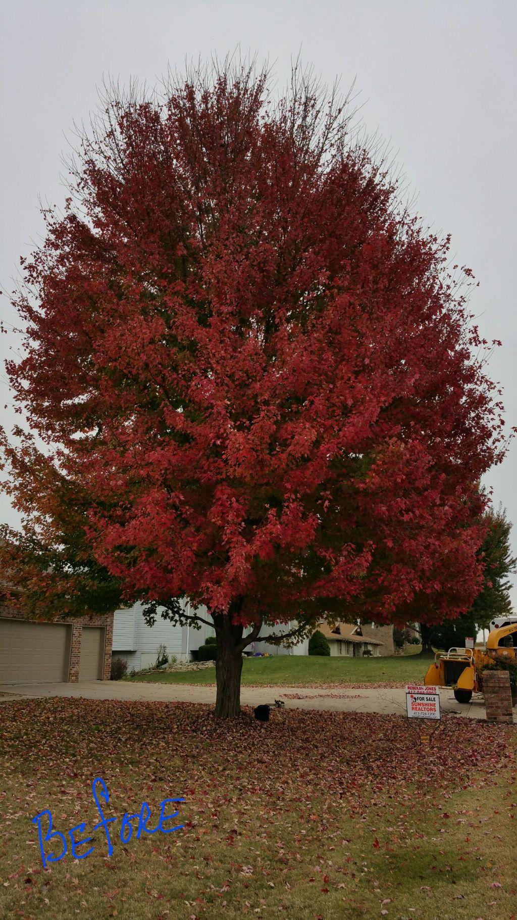 Acorn Tree Care LLC