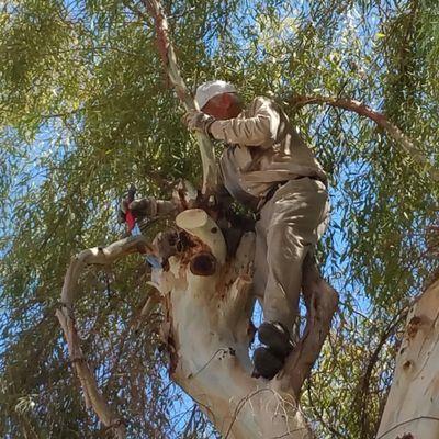 Avatar for Superior Tree Care Tempe, AZ Thumbtack