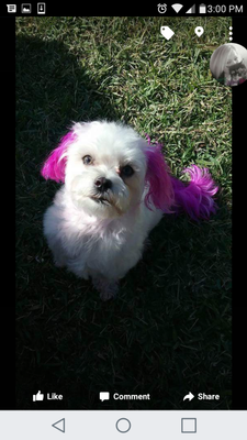 Avatar for Rhonda's in house dog grooming