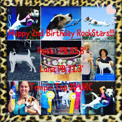 Avatar for Independent Dog Sports Training, walking, dayca... Ceres, CA Thumbtack