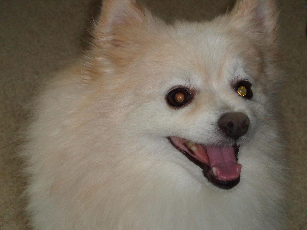 Shari's Canine Care