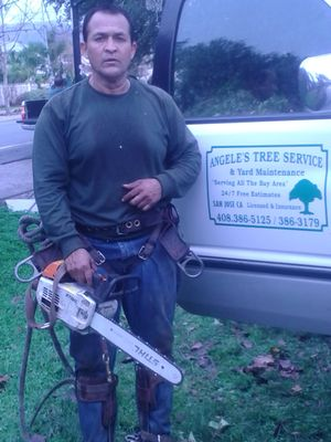 Avatar for Angele's Tree Service