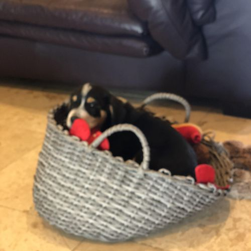 Leo placing in a basket