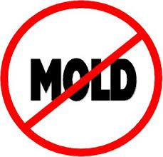 We kill mold not budgets