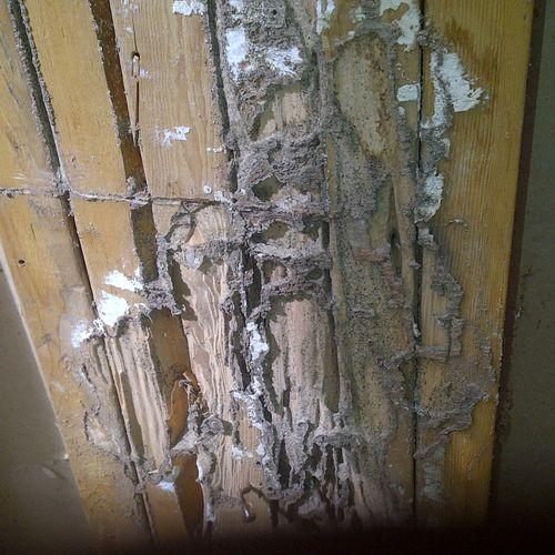 Termite Mudtube/Damage