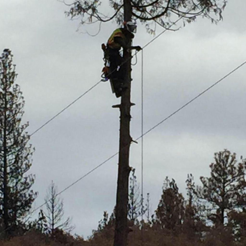 Bottom 2 Top Tree Service