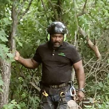 The Tree Mechanic
