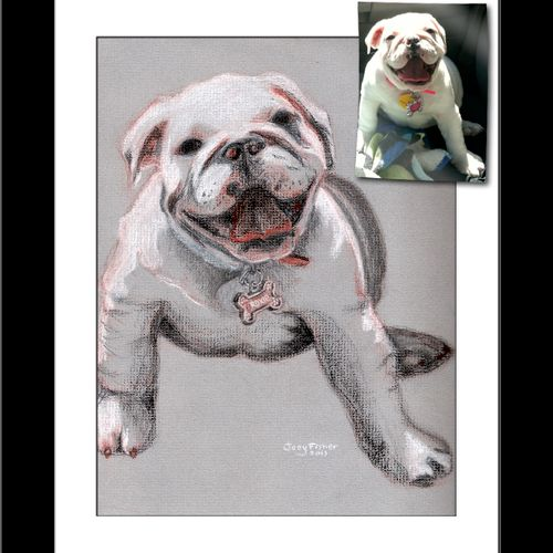 Bulldog pet portrait done in Conté crayon.