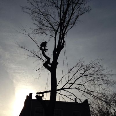 Avatar for Royal Tree Service