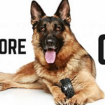 Northshore Canine Academy