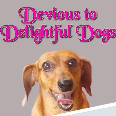 Avatar for Devious to Delightful Dog Training Brookfield, IL Thumbtack